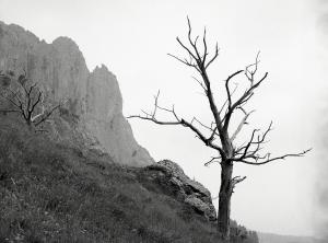 árbol seco_Javier Ferdo