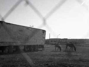 caballos_Javier Ferdo