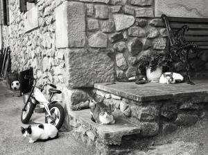 tres gatos_Javier Ferdo
