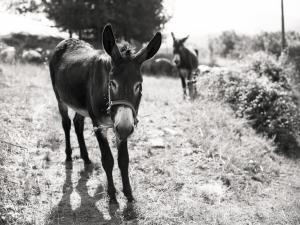 dos burros_Javier Ferdo