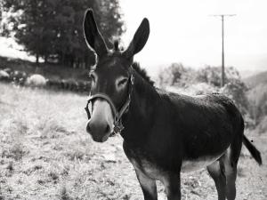 un burro_Javier Ferdo